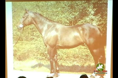 Discussion focused on what to look for in a brood mare and stallion. Conformation overviews. Excellent information for breeders.  by Dressage Today Online