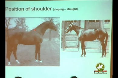 Discussion focused on what to look for in a brood mare and stallion. Conformation overviews. Excellent information for breeders. Croup and shoulder analysis.  by Dressage Today Online