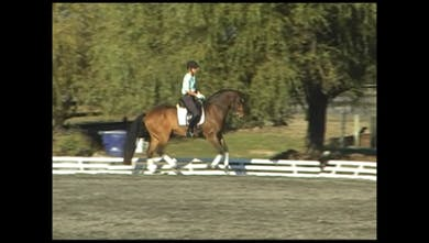 Third Level Half Pass to Flying Change-in this section the horse loses the forward movement once they go sideways so works begins on fixing this. by Dressage Today Online