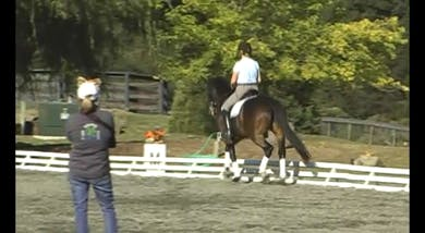 Fourth Level, Halt Reinback- This newly introduced movement is demonstrated. Poll position is shown and discussed.  by Dressage Today Online