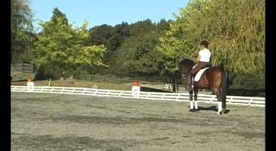 Fourth Level, Half Pass Work- Set up is SOOO important, showing that you MUST get the inside bend before asking for the sideways.  by Dressage Today Online