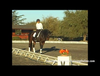 Training Level, Connection and Obedience,  by Dressage Today Online