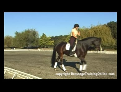 First Level Expectations by Dressage Today Online