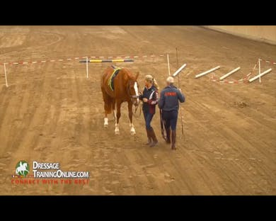 The first horse is brought into the arena, and Mr. Haanstra explains that before lunging any horse he makes sure that the horse leads well and is thinking forward.  The demo horse is frisky, and Lammert allows him to go forward until he relaxes. by Dressage Today Online