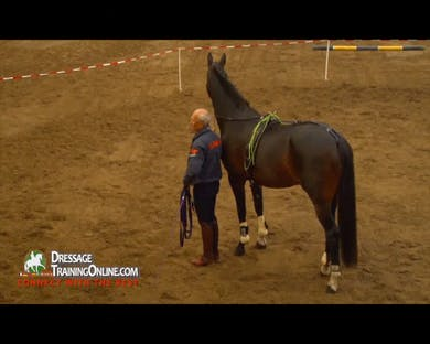 The horse readily accepts the crupper and the whip, and Mr. Haanstra explains his use of the whip by Dressage Today Online
