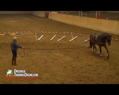 The horse swings in his back as he trots out, and Mr. Haanstra asks the owner to come in.  He gives her instructions on how to lunge herself. by Dressage Today Online