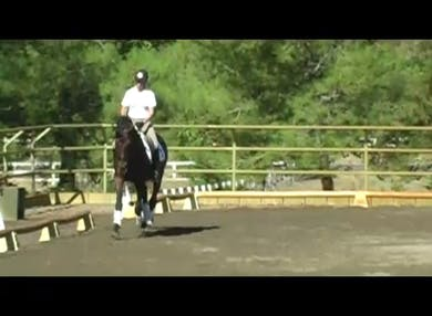This segment shows a three year old dressage test. by Dressage Today Online