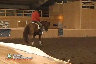 They do trot with a few steps of walk back to trot, always thinking of using the inside leg. by Dressage Today Online