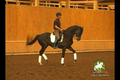 Video 2: Intermediare 1/S Level/Advanced- continuing on. by Dressage Today Online