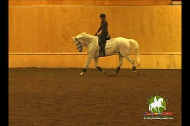 Video 3: 2nd Level/Elementary- Lateral work begins. More contact issues are discussed. Focus on the basics of the training scale.  by Dressage Today Online