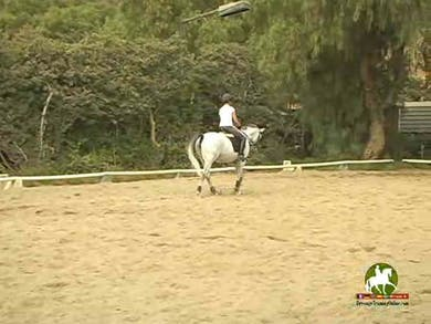 Video 2: Basic relaxing warmup,allowing the rider to focus on herself. by Dressage Today Online