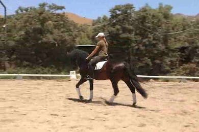 Video 7: Walk, trot, canter. Figuring out the right buttons already within the horse. by Dressage Today Online