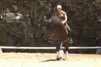 Video 7: Lateral work, passage. by Dressage Today Online