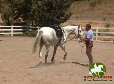 Video 8: Alfredo works in hand with this young horse. Getting him sensitive and listening to the aids given. He then moves into working on piaffe and half steps. by Dressage Today Online