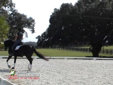 This lovely, well matched pair warms up while Mr. Steiner assesses the work to be done. by Dressage Today Online
