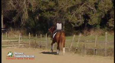 When returning to the canter, they ask for a lengthening.  He becomes closed in his neck line, and Alizee helps the rider pick him up. by Dressage Today Online