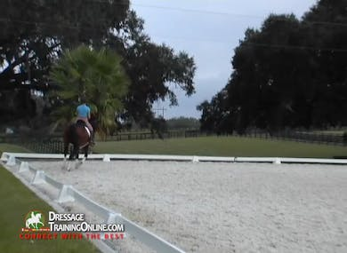 They continue with their trot halt trot transitions, knowing he will eventually have to have his hindquarters more underneath in the transitions. by Dressage Today Online