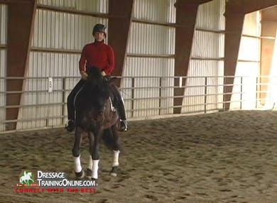 We join Dani Dockx after this horse has had a thorough warm up.  This horse and rider pair show great adjustability as they work through the canter half pass and counter canter. by Dressage Today Online