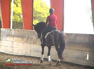 This section starts with great shoulder ins, showing a beautiful PRE with good contact by Dressage Today Online