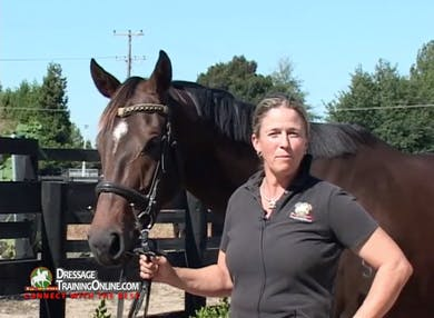 Jody Hartstone, a New Zealand GP rider and Equitation Science expert, brings us a series of videos on retraining off the track Thoroughbreds for dressage.  This video covers what to look for when purchasing and beginning the training.  by Dressage Today Online