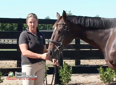 Jody talks about training including cross tying and mounting from the ground. by Dressage Today Online