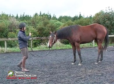 Jody shows how to teach the horse to remain still and talks about the benefits of this training.  She also works with teaching the mare to lower her head while standing.  Jody demonstrates these principles with a second, more sensitive horse.  by Dressage Today Online