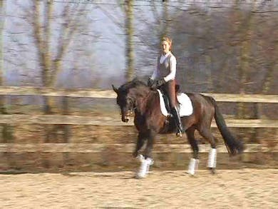 Warm up, working on trot canter transitions for throroughness and obedience. by Dressage Today Online
