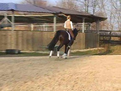 Counter canter, forward and back within the same gait. by Dressage Today Online