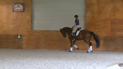 Instant Access to Gary Rockwell - Delicate Connection - Part 3 by Dressage Today Online, powered by Intelivideo