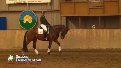 best horse training methods