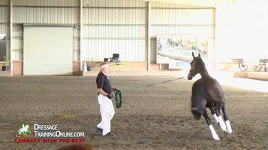 Willy explains how he uses the lunge whip and his own body position as he lunges. by Dressage Today Online