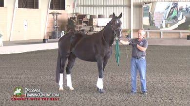 Willy Arts returns for another lunging demonstration, and shows how the horse must be on the aids and forward right from the beginning. - Part 1 by Dressage Today Online