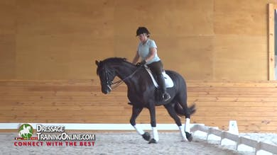 In the trot they continue to ask him to reach with the poll lower. - Part 2 by Dressage Today Online