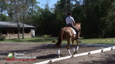 In the canter they warm up by using the short ends to shorten the stride before going to a 20 meter circle at B. - Part 2 by Dressage Today Online