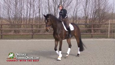 Helen Langehanenberg - Working Toward Prix St. Georges - Part 1 by Dressage Today Online