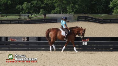 Catherine Haddad rides her warm up for Grand Prix test. by Dressage Today Online
