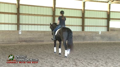 As Laura begins to work with this pair in the walk, she has the rider determine whether the horse is giving the rider the feel in the rein that they want. - Part 1 by Dressage Today Online