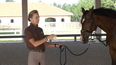 Gene Freeze - Saddle Fitting - Part Three - The Rider and Saddle Fit by Dressage Today Online