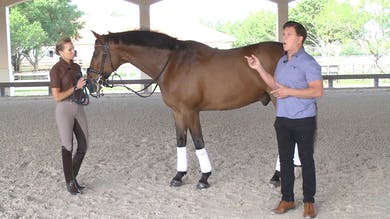 Gene Freeze - Saddle Fitting - Part Six - Riders' Center of Balance by Dressage Today Online