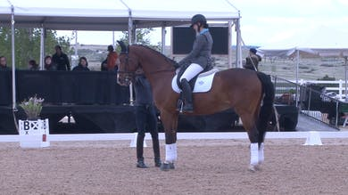 Steffen Peters - Training Level - Part Two by Dressage Today Online