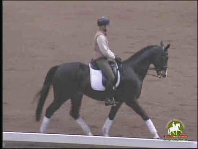 Ingrid Klimke - Cavelletti Work, Part 1 by Dressage Today Online