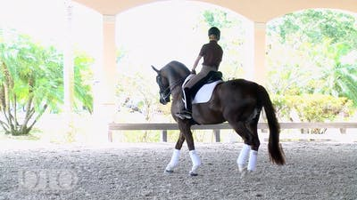 Lisa Wilcox - Training with Ernst Hoyos Part 2 - Piaffe and Passage by Dressage Today Online