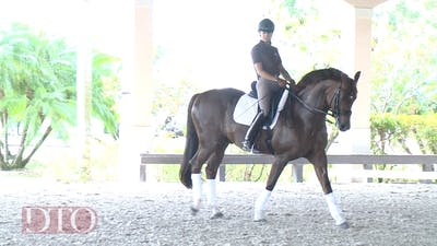 Lisa Wilcox - Training with Ernst Hoyos - What to Look for in a Young Horse by Dressage Today Online