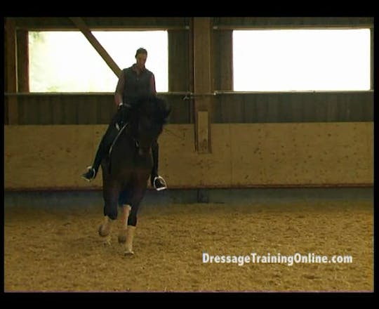 Instant Access to Martin Schaudt-GER by Dressage Today Online, powered by Intelivideo