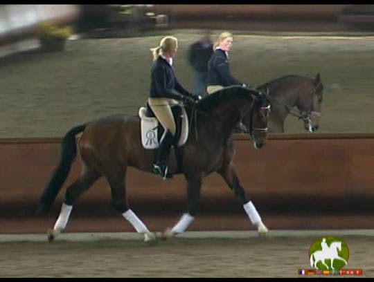Instant Access to Dr. Ulf Moller-GER, 5 year old, 2nd Level by Dressage Today Online, powered by Intelivideo