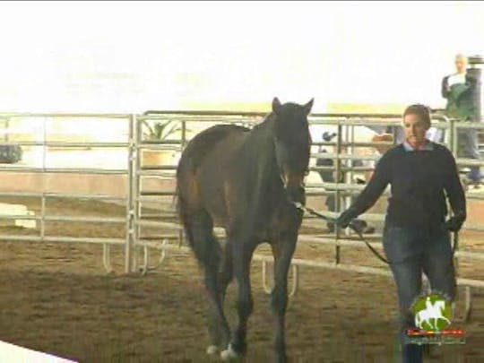 Instant Access to KWPN-NA 2011 Educational Seminar and Meeting by Dressage Today Online, powered by Intelivideo