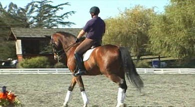 Through The Levels with Debbie McDonald and Janet Foy by Dressage Today Online