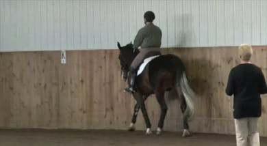 Farmvet/USDF Adult Clinic with Lilo Fore-Foundation Training for Young Horse by Dressage Today Online