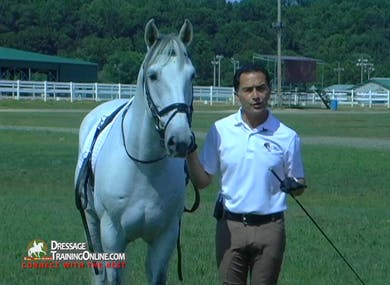Vitor Silva - Long Lining, Intro by Dressage Today Online