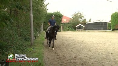 Laurens van Lieren - Small Aids by Dressage Today Online